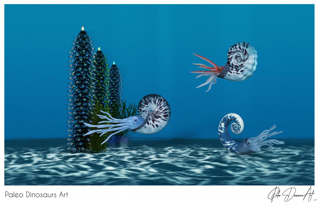 Paleo Dinosaurs Art presents: Ammonite, Anahoplite and Emericiceras