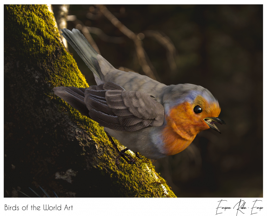 Birds of the World Art presents: European Robin from Europe