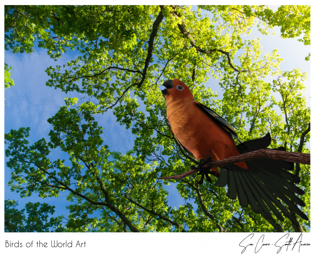 Birds of the World Art presents: Sun Conure (endangered) from South America