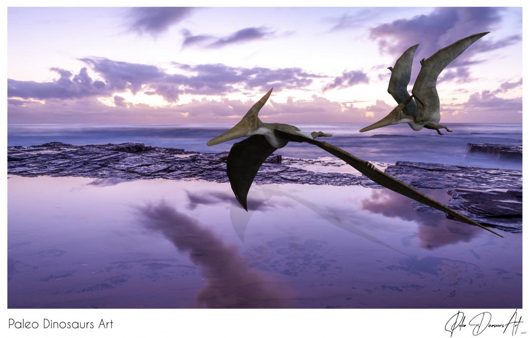 Paleo Dinosaurs Art presents: Pteranodons
