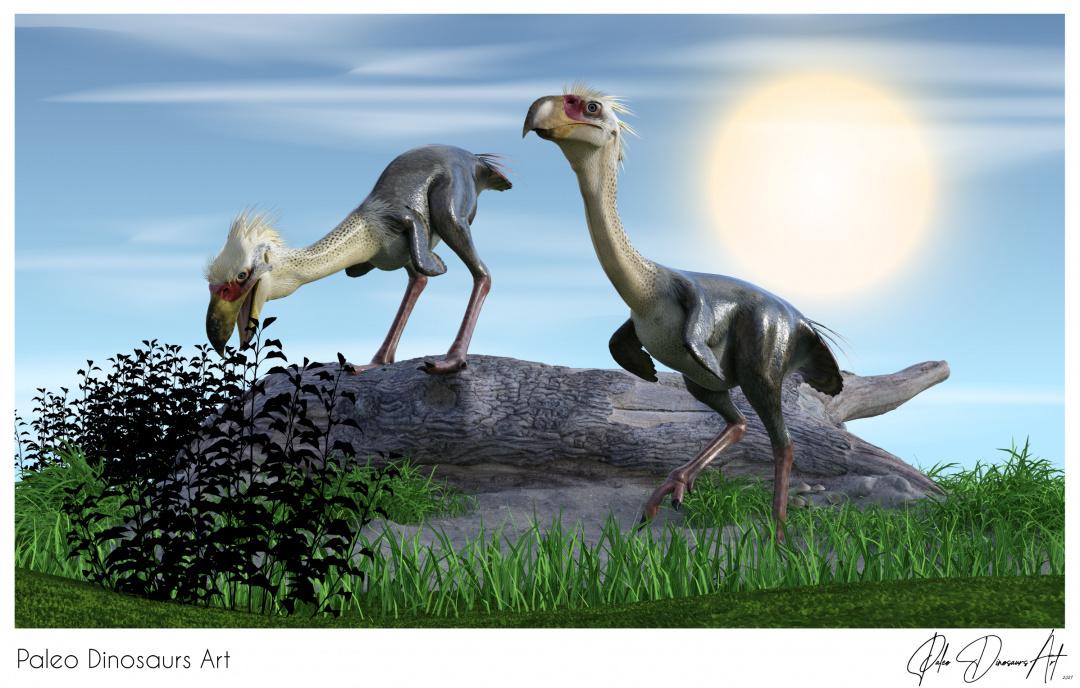Paleo Dinosaurs Art presents: Phorusrhacos