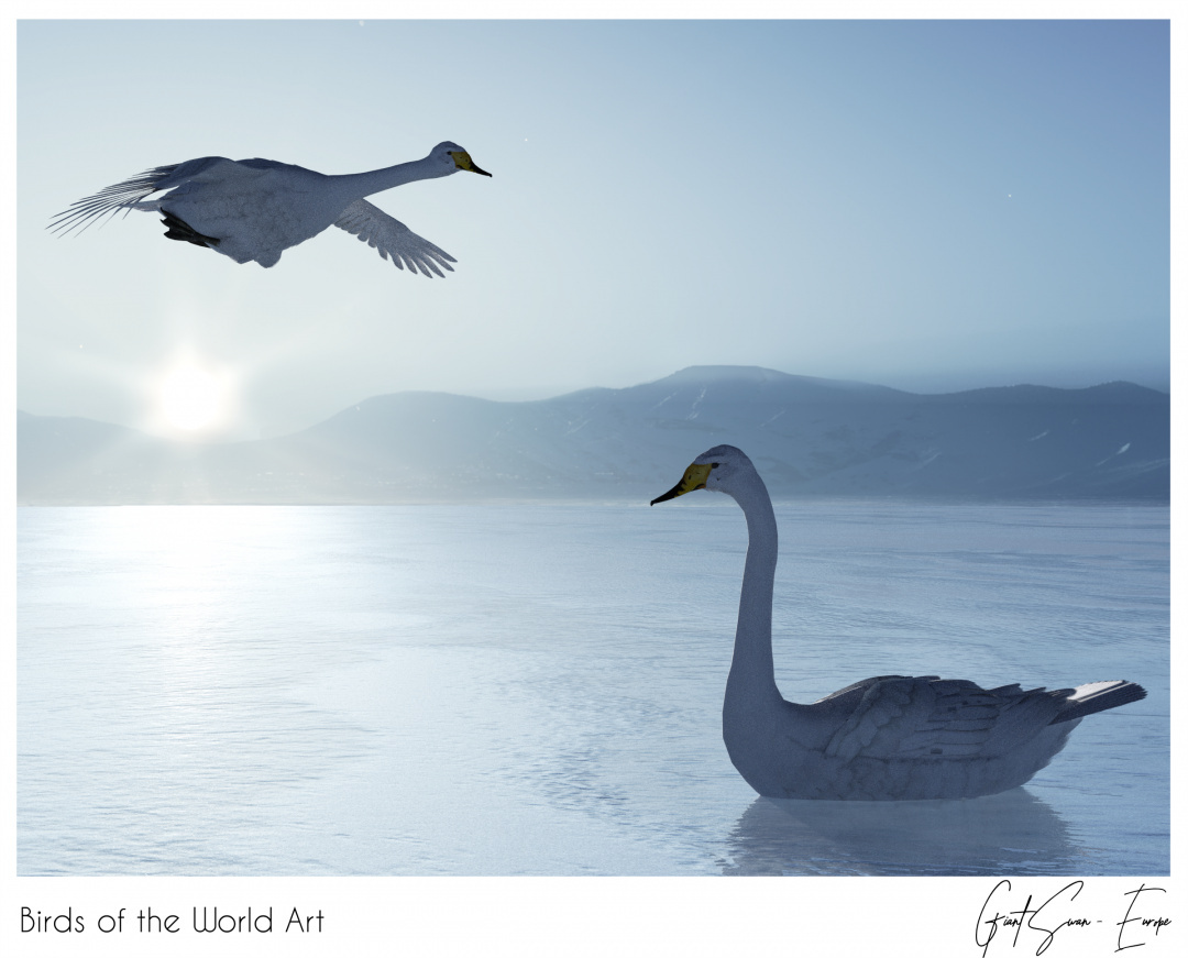 Birds of the World Art presents: Giant Swan from Europe (extinct)