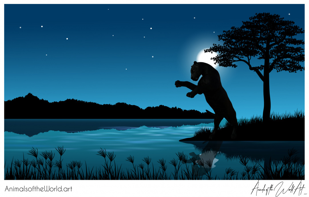 Animals of the World Art presents: Black Panther (Leopard)