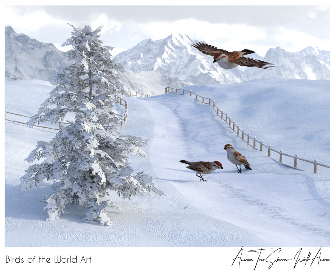 Birds of the World Art presents: American Tree Sparrow from North America