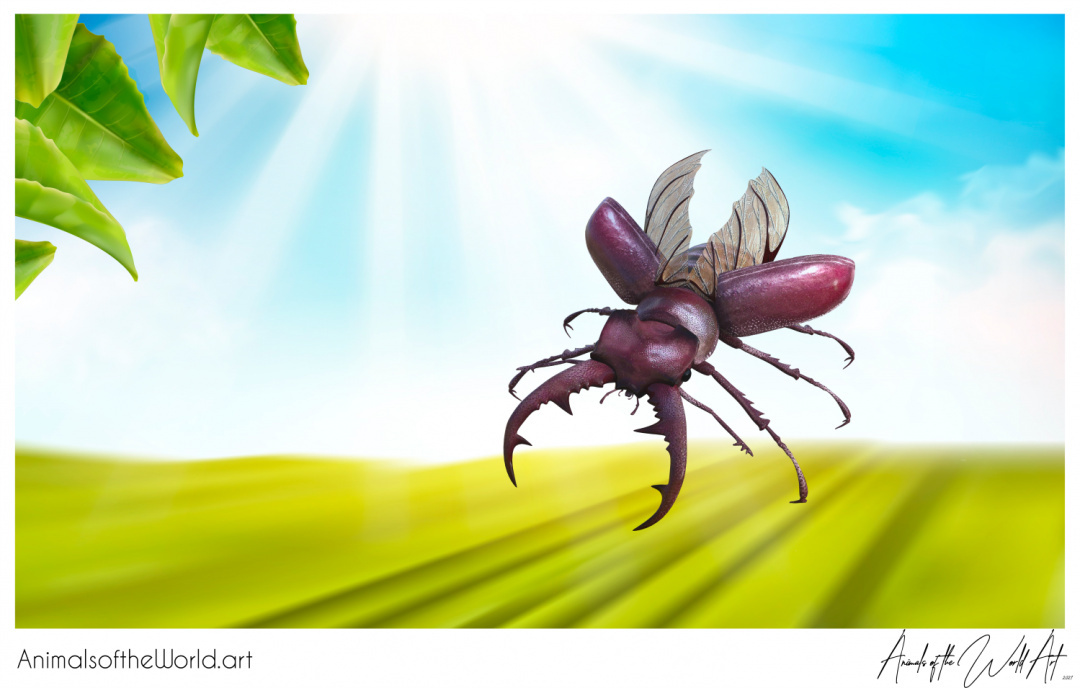 Animals of the World Art presents: Stag Beetle