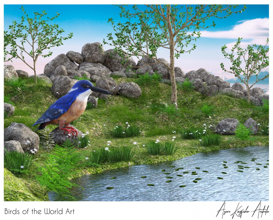 Birds of the World Art presents: Azure Kingfisher from Australia