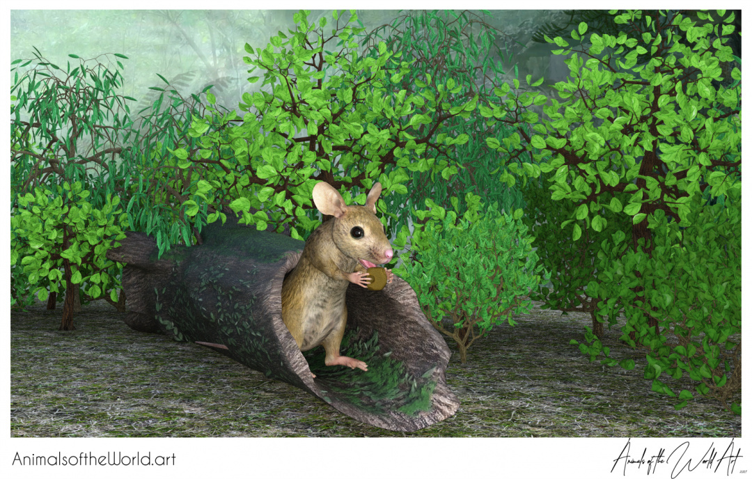 Animals of the World Art presents: Brown Mouse