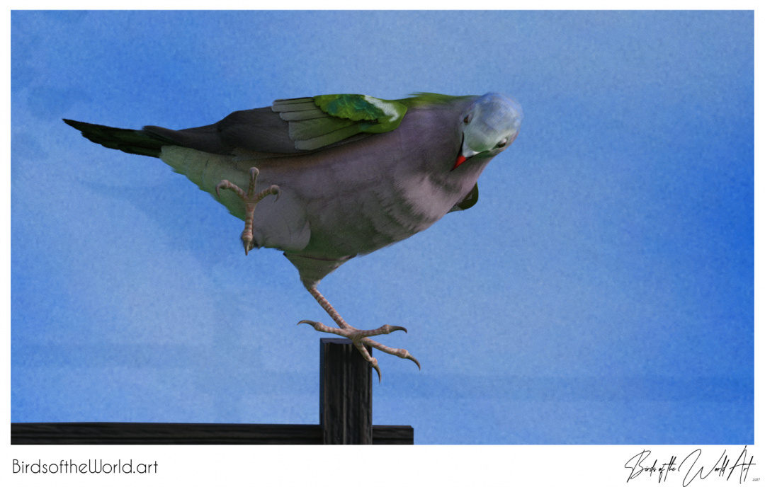 Birds of the World Art presents: Common Emerald Dove from Asia