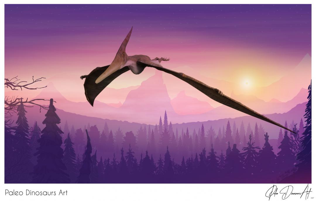 Paleo Dinosaurs Art presents: Pteranodon cruising