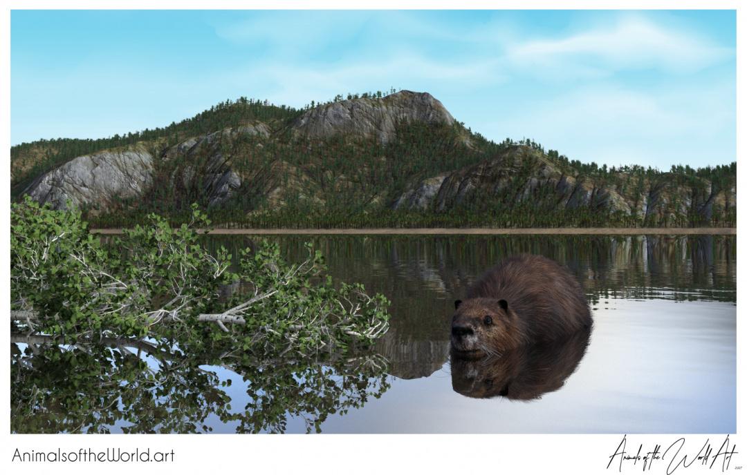 Animals of the World Art presents: Beaver