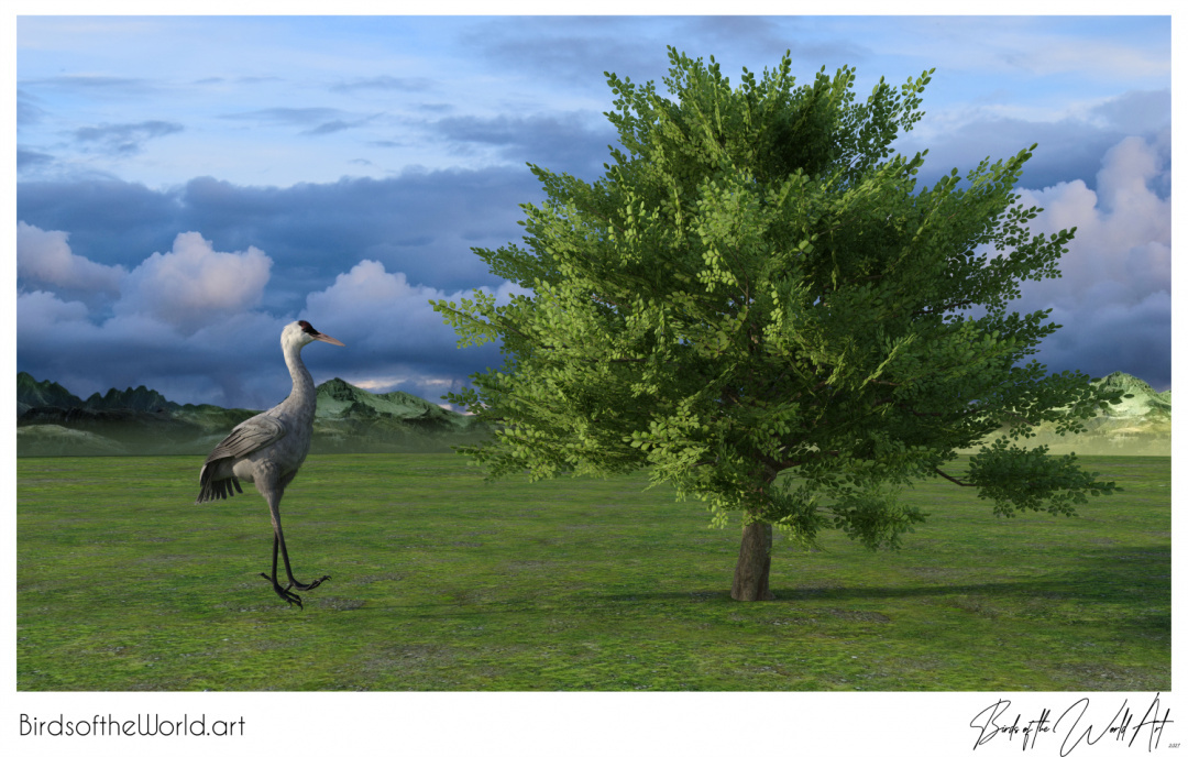 Birds of the World Art presents: Hooded Crane from Asia (vulnerable)