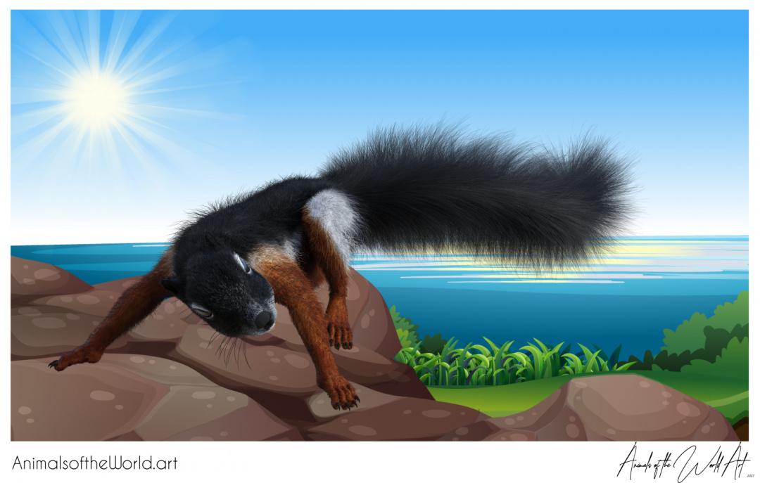 Animals of the World Art presents: Prevost Squirrel