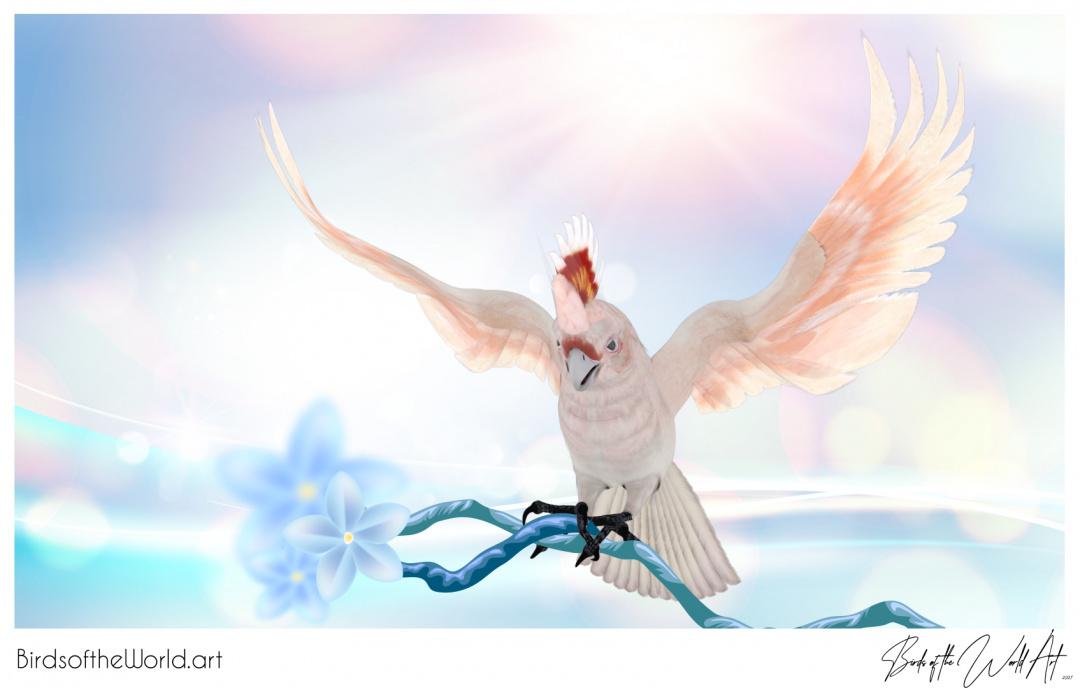 Birds of the World Art presents: Major Mitchells Cockatoo