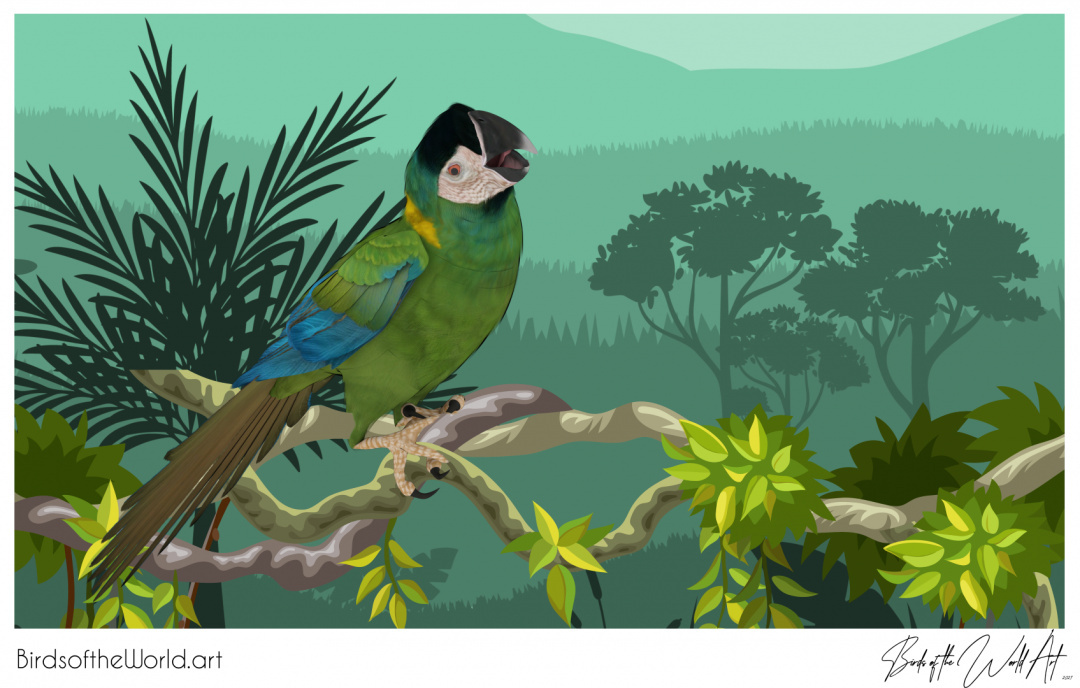 Birds of the World Art presents: Golden-collared Macaw