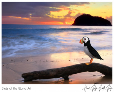 Birds of the World Art presents: Horned Puffin from North Pacific