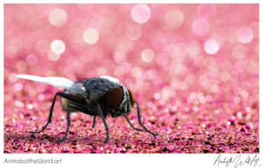 Animals of the World Art presents: Housefly
