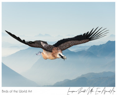 Birds of the World Art presents: Lammergeier or Bearded Vulture from Europe, Africa and Asia