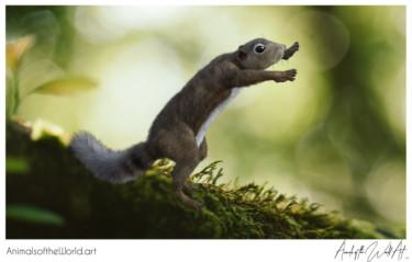 Animals of the World Art presents: Gambian Sun Squirrel