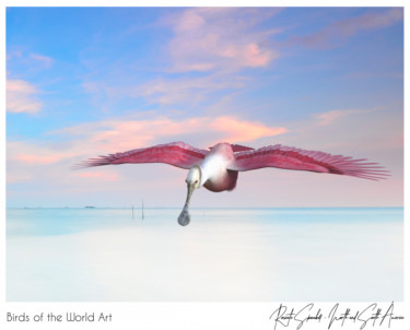 Birds of the World Art presents: Roseate Spoonbill from North and South America