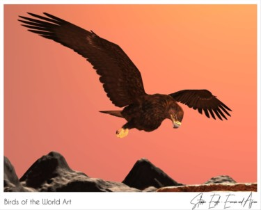 Birds of the World Art presents: Steppe Eagle from Eurasia and Africa