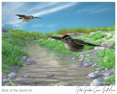 Birds of the World Art presents: Florida Grasshopper Sparrow (endangered)